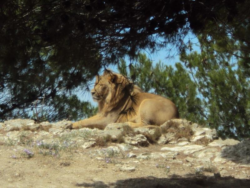 Toutes les informations pour la visite du parc de Sigean